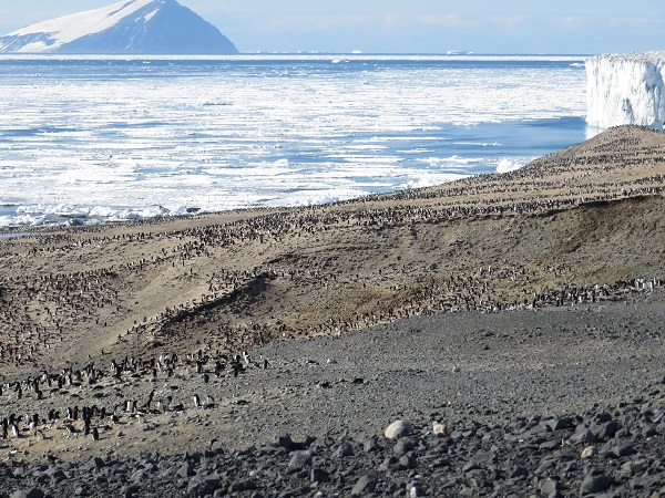 The Adelie penguin rookery