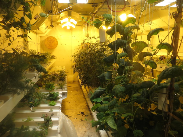 The South Pole Greenhouse