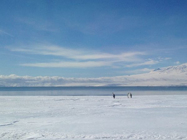 We stopped on the sea ice to get a good look at 3 Emperor penguins